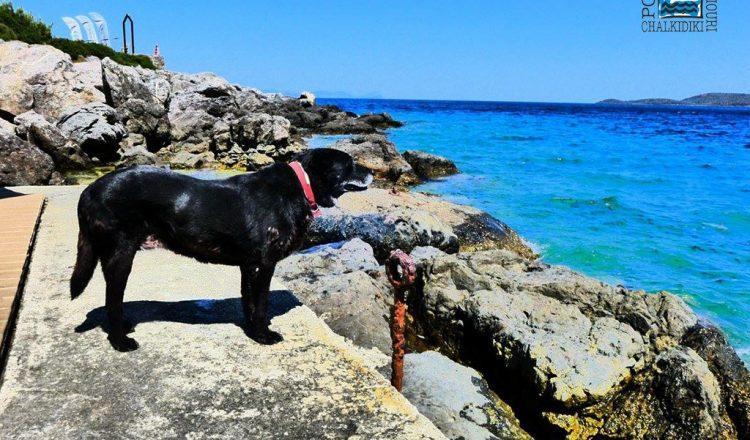 Holidays with your most loyal friend at our dog-friendly hotel