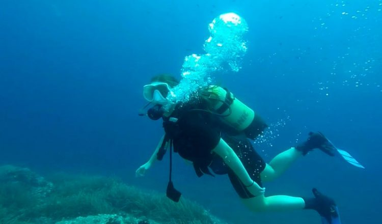Dive into the Beauty of Marine Flora